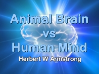 Listen to Animal Brain vs Human Mind