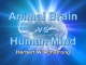 Animal Brain vs Human Mind